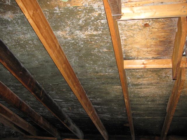 Attic Ceiling Mold Newton Ma