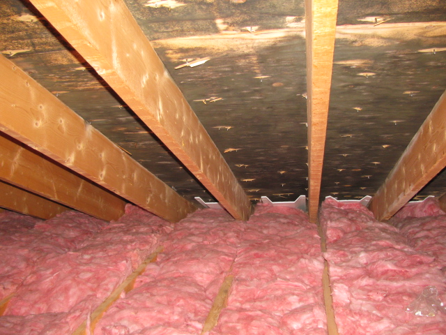 Attic Mold Remediation Experts Toxic Black Mold Removal Ma
